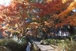 Youkou-kan, A Japanese Garden in Fukui