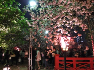 Cherry Blossoms in the Osaka Mint
